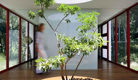 verbindung-vom-interior-design-zu-natur_der-baum-als-mittelpunkt-im-innenraum