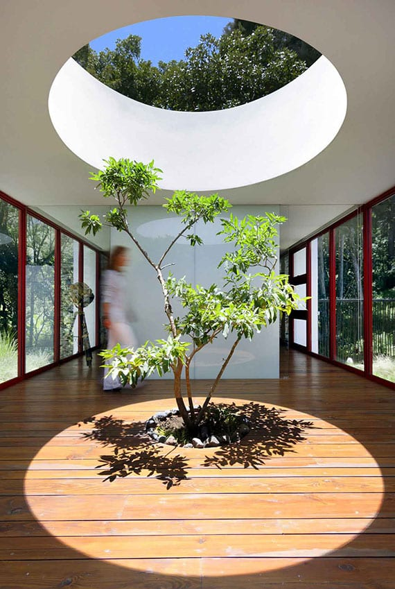 moderne innenarchitektur einer glashalle mit roten fensterrahmen und rundem oberlicht über Baum im Holzboden