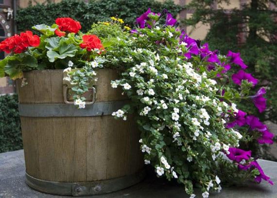 sommerblumen für attraktive farbgestaltung der terrasse und kleinen garten auf dem balkon