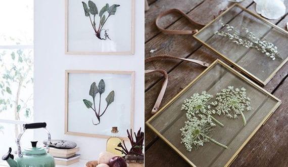 pflanzen-in-transparenten-bilderrahmen-als-coole-idee-für-DIY-Wanddeko-und-DIY-Geschenk