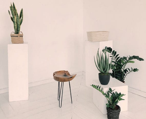 raumluft in geschlossenen räumen verbessern und reinigen mit pflanzen wie Bogenhanf, Aloe Vera und Zamioculcas