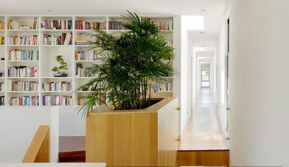 mit-bambuspalmen-raumklima-verbessern-und-zimmer-attraktiv-dekorieren