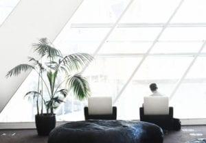saubere-und-gesunde-Luft-in-allen-Räumen-kriegen-dank-pflanzen-oder-moderner-luftreiniger