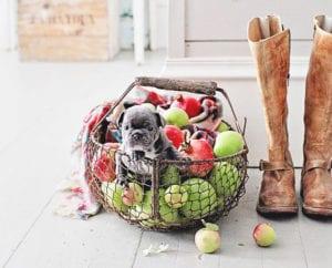 mit-äpfeln-dekorieren-und-einen-herbstzauber-dem-interieur-verleihen