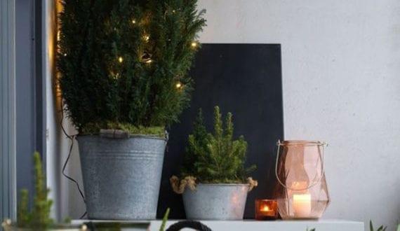 terrasse-im-winter-gemütlich-einrichten-und-stilvoll-dekorieren-mit-winterharten-pflanzen