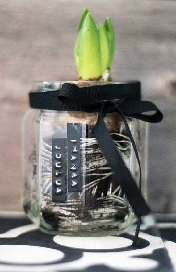 coole idee für DIY Weihnachtsgeschenk mit Hyazinthe im glas mit schwarzer schleife und schwarzen DYMO-Etiketten