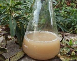 natürliches-waschmittel-und-waschpulver-selber-machen_wäsche-waschen-mit-diy-waschmittel-aus-Seifenkraut