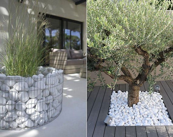 modernes gartendesign mit pflanzen und gewächsen im kiesbeet