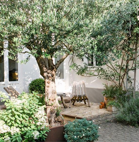 coole idee für schattigen sitzplatz im garten unter einem olivenbaum