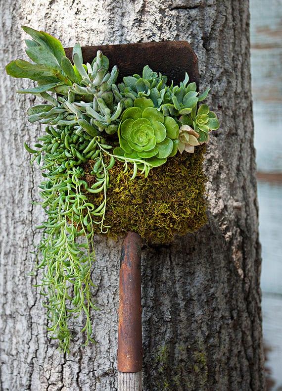 coole deko idee für den garten mit schaufel und Sukkulenten