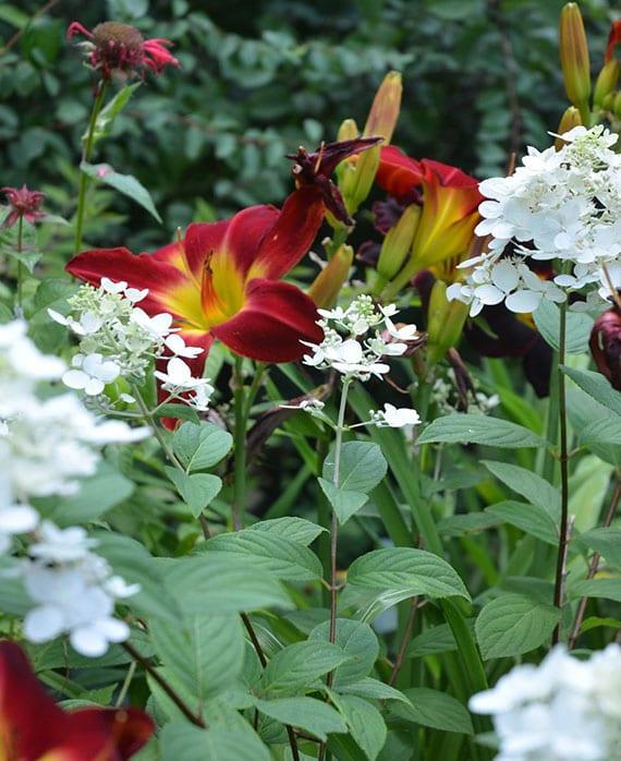 schöne pflanzenkombinationen mit taglilien für eine atemberaubende gartengestaltung im sommer