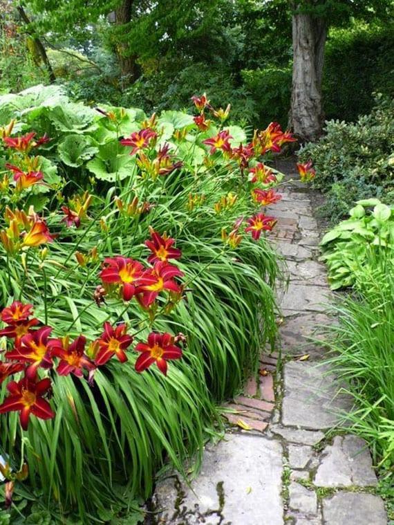 kreative idee für gestaltung von gartenwege mit randbepflanzung aus roten taglilien