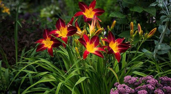 Schöne und anspruchslose Gartengestaltung mit Taglilien