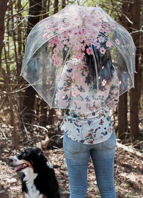 einen durchsichtigen regenschirm mit sakura-blüten selber gestalten