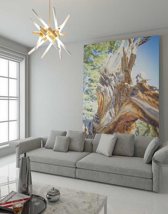 wald fototapete und bäumebilder als effektvolle zimmerdeko mit positivem Einfluss auf unser wohlbefinden