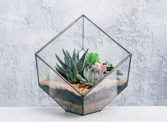 aufgrund ihrer schönen Form sind Sukkulenten beliebte Deko-Elemente für zimmer und garten