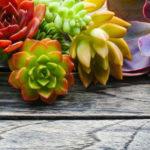 Sukkulenten_Arten, Pflege und Vermehrung dieser attraktiven Pflanzen