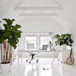 ideen und tipps bei der auswahl richtiger pflanzen fürs wohnzimmer