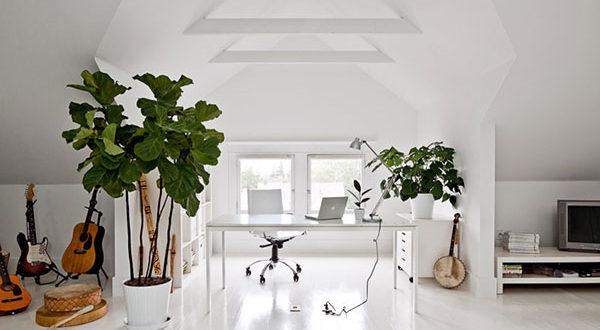 Grünpflanzen im Wohnzimmer: Warum kein Raum auf die mitwachsende Deko verzichten sollte