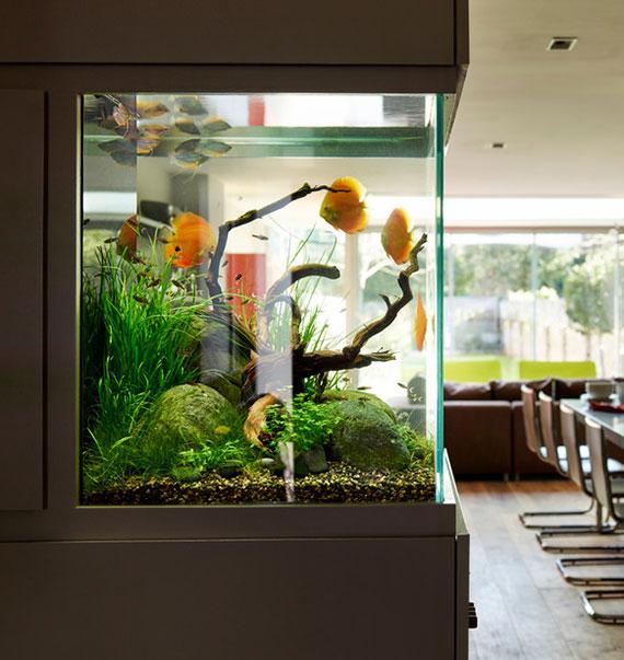 das aquarium faszinierend gestalten mit den richtigen wasserpflanzen, steinen, hälzern und substrat
