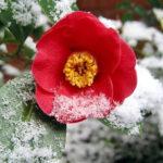 es gibt Pflanzen, die auch im Winter gepflegt werden müssen
