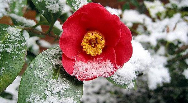 Gartenarbeit im Winter – Darauf ist zu achten