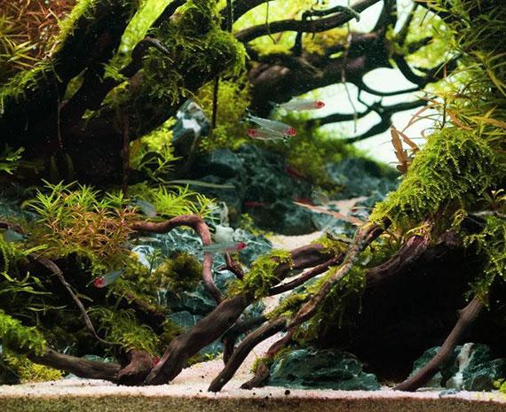 das Aquarium durch Steine und Pflanzen in Schwimmbereiche teilen