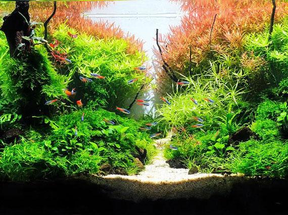 der Unterschied zwischen einem normalen Aquarium und einem Raumteiler-Aquarium