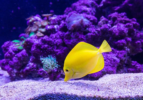 was ist wichtig beim Aquarium Einrichten
