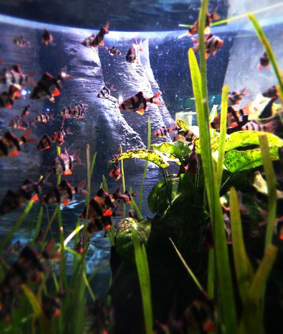 das richtige Verhältnis von Pflanzen und Mikroorganismen versorgt das Aquarium mit genug Sauerstoff und verringert die Düngung