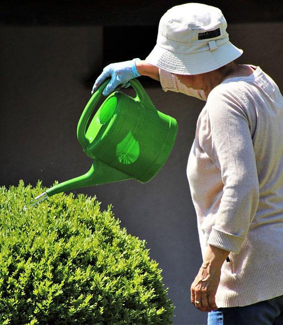Immergrüne Pflanzen im Garten brauchen auch im Winter Wasser