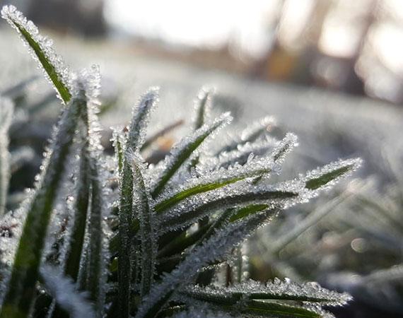 bei Schnee ist der Rasen für Krankheiten anfällig und soll daher nicht betreten werden