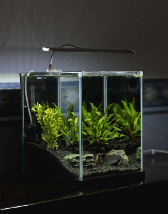 aquarien in klassischer größe haben die größte palette an ausstattungsmöglichkeiten