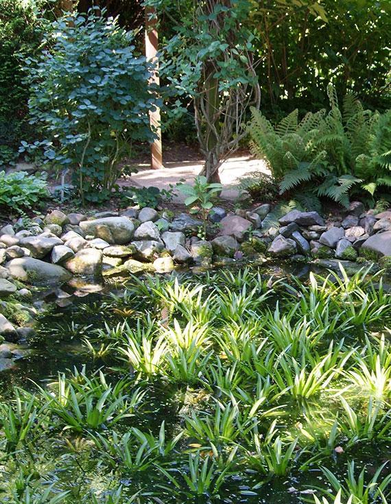 Wasseraloe ist ein optischer Gewinn für jeden Gartenteich