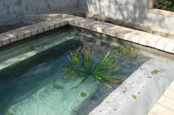 als sogenannte Repositionspflanze reinigt die freischwimmende Wasseraloe das Wasser im Gartenteich