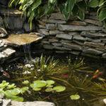 winterharte Schwimmpflanzen im Gartenteich ansiedeln und pflegen
