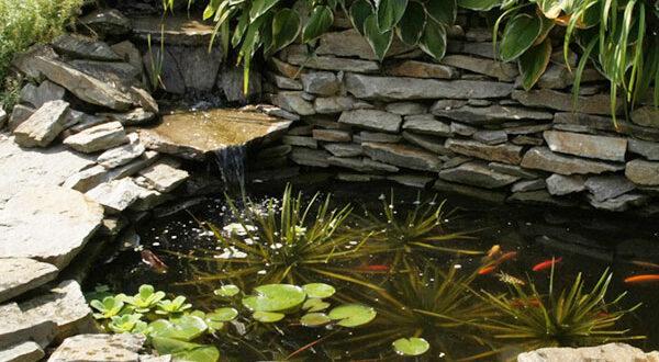 Krebsschere – die freischwimmende Pflanze für gesunden Gartenteich