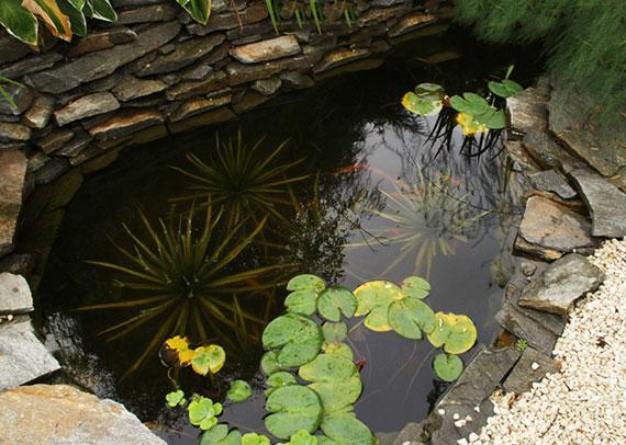 Krebsschere hält den Gartenteich gesund und bietet tierischen Bewohnern gute Versteckplätze