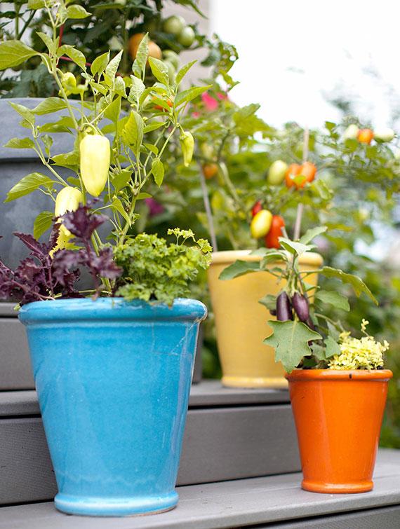 mit Kräutern und Balkongemüse im Pflanzkübel eigenen Gemüsegarten auf dem Balkon anbauen