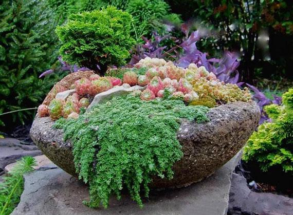 mit winterharten Sedum-Sorten im Pflanzkübel den Garten das ganze jahr über begrünen und beleben