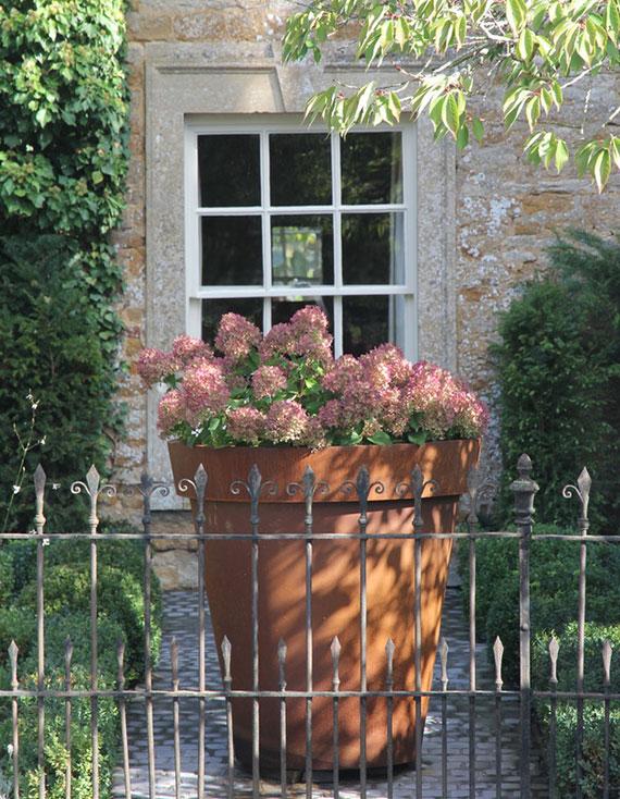effektvolle gartengestaltung mit rosafarbiger Hortensie im großen runden blumenkübel aus stahl