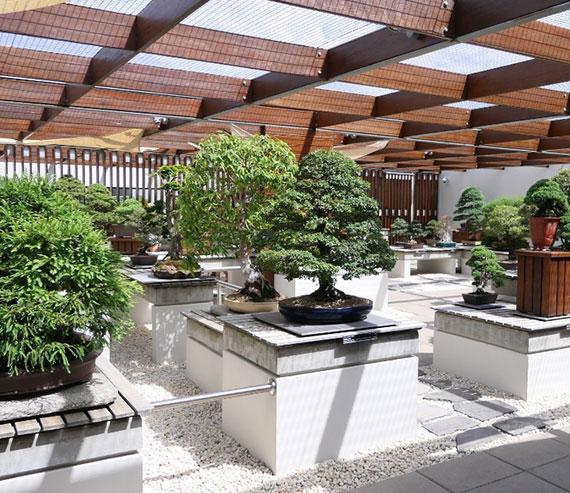 Das Arboretum in Australien bietet den Besuchern interessante Ausstellungen und einen spektakulären Abschnitt mit atemberaubender Sammlung von Bonsai Bäumen