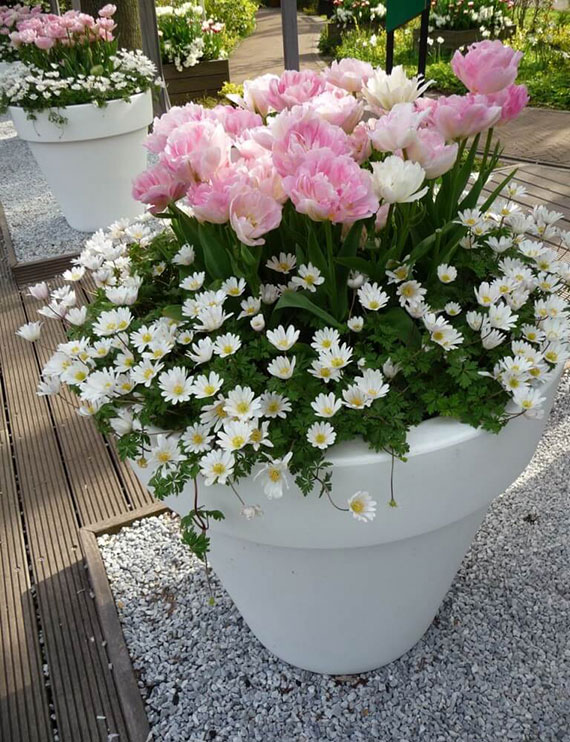frühlingsterrasse gestalten mit zarten Frühblüher wie tulpen und Windröschen in groeßen weißen blumentöpfen