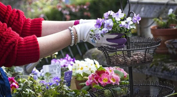 Frühblüher im Topf: leuchtende Frühlingsfarben auf Balkon und Terrasse