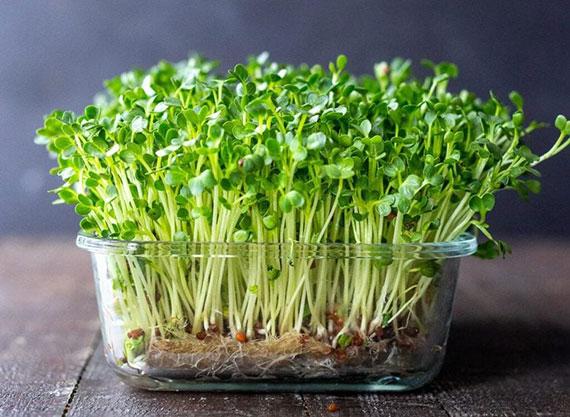 das neue Superfood als Gemüse oder Kräuter im Miniformat eignen sich sehr gut als Salatzutat, Topping auf Suppen oder Gemüsegerichten