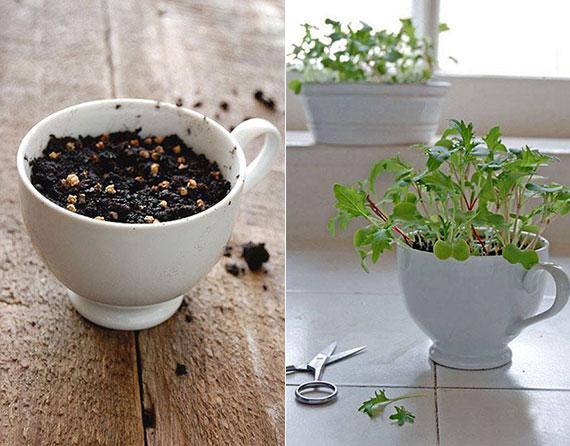 Welche Pflanzen lassen sich als Microgreens selbst ziehen