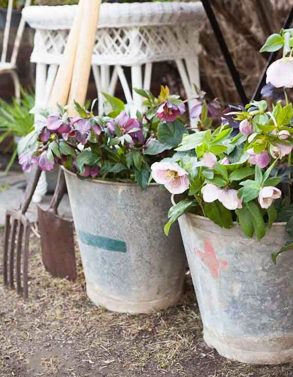 Lenzrosen als farbenprächtige Frühblüher im Topf für farbenfrohe terrassengestaltung