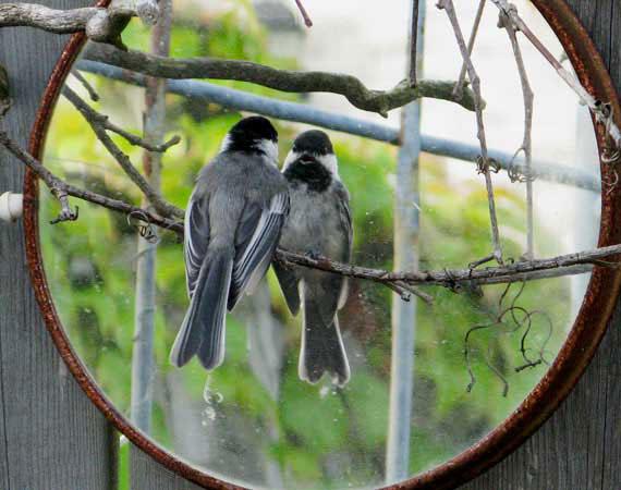 für begeisterte Vogelliebhaber ist die Verwendung von Gartenspiegeln nicht ratsam