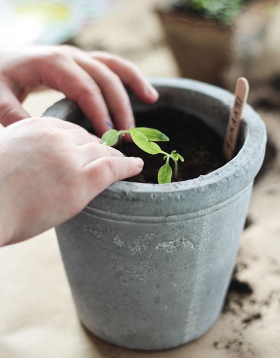 DIY Blumentopf aus Beton mit Kräutern bepflanzen