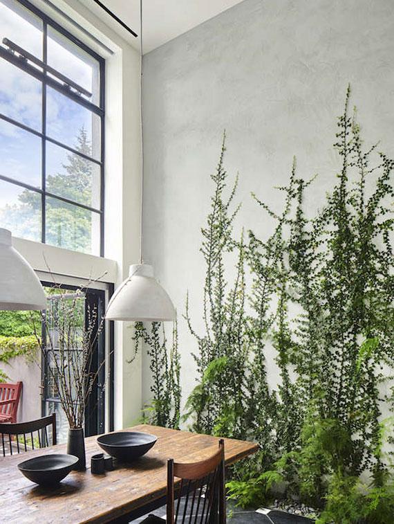 als grüner Schmuck verleihen Zimmerfarne jeder Wohnung das gewisse Etwas
